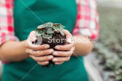 Garden center employee holding plant