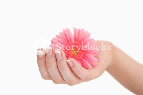 French manicured hand holding flower