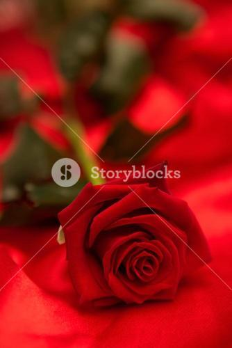 Red rose on red silk