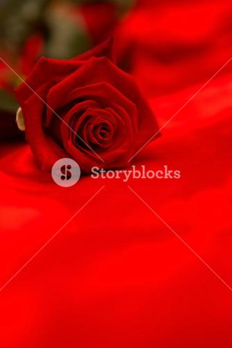 Red rose resting on red silk