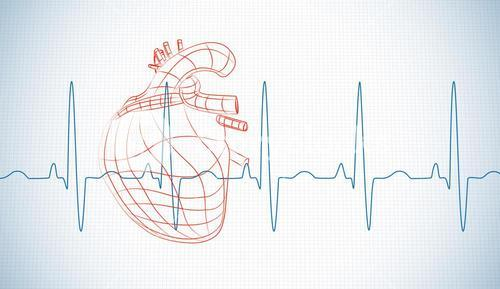 Drawn human heart and heart rate line