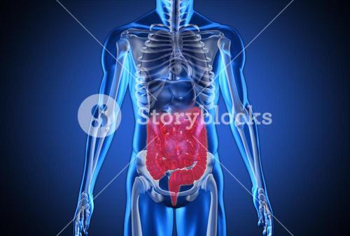 Digital blue human with highlighted digestive system