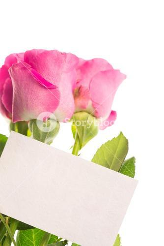 Blank card with pink roses