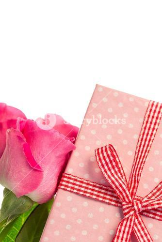 Pink roses leaning on pink wrapped present