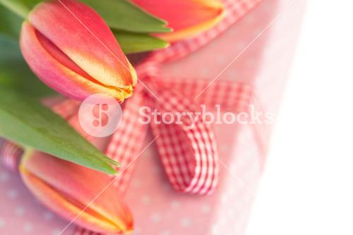 Pink and yellow tulips resting on pink wrapped present