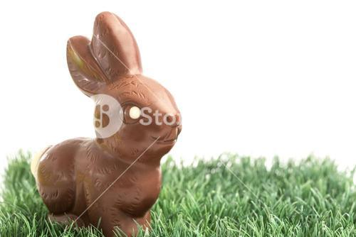 Chocolate bunny rabbit on grass