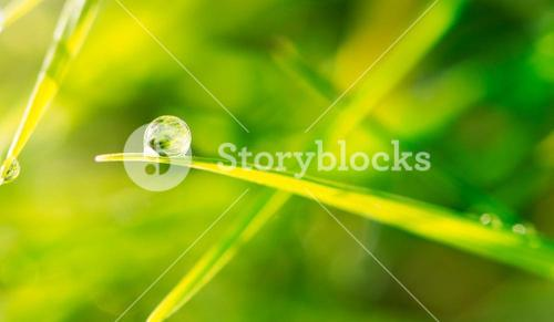 Dew drop on blade of grass