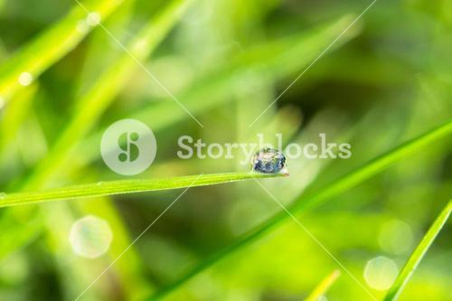Dew drop on the grass close up