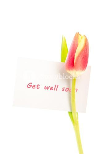 A tulip with a get well soon card