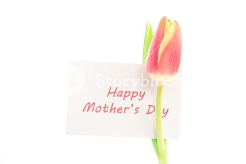 A beautiful tulip with a happy mothers day card