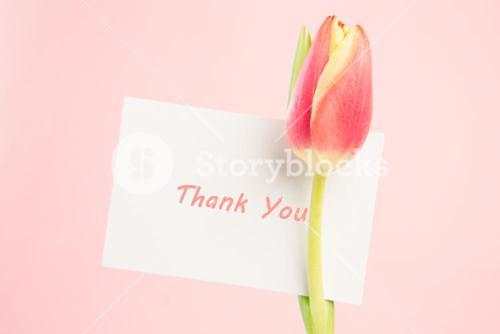 Close up of a beautiful tulip with a thank you card
