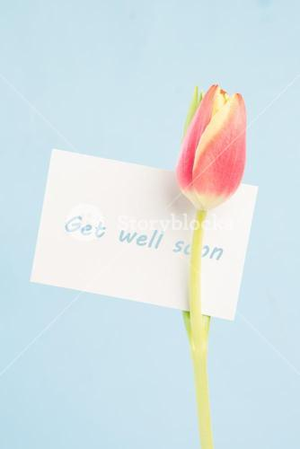 A beautiful tulip with a get well soon card