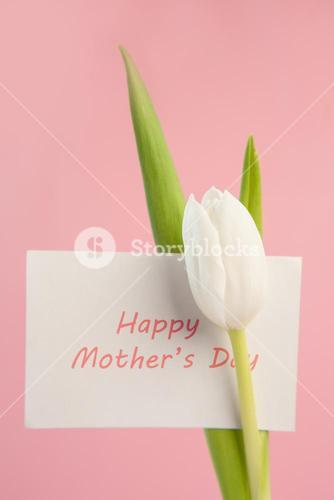 Beautiful white tulip with a happy mothers day card