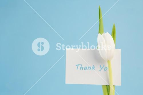 White tulip with a thank you card on a blue background