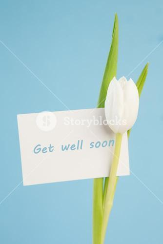 White tulip with a get well soon card on a blue background