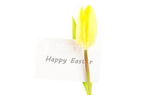 Yellow tulip with a white and blank card on a white background