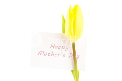Yellow tulip with a white happy mothers day card