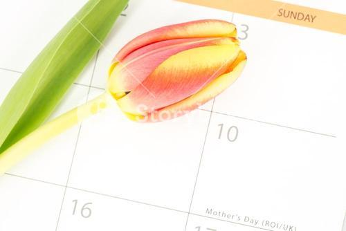 Close up of a beautiful tulip on a calendar marking mothers day