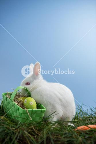 White bunny rabbit sitting on grass with basket of eggs