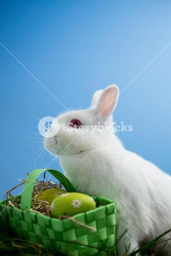 Fluffy bunny rabbit sitting with basket of easter eggs