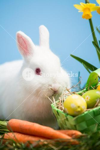 White bunny sitting beside easter eggs in green basket and carrots