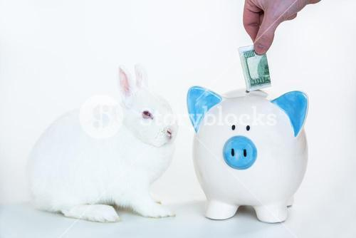 White bunny sitting beside blue and white piggy bank with hand putting money in