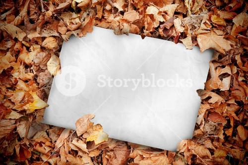 White poster buried into dead leaves