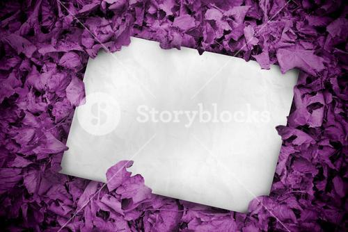 White poster buried into purple leaves