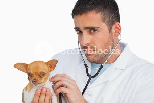 Concerned vet checking dog with stethoscope