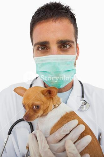 Vet holding chihuahua and wearing green protective mask