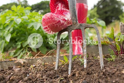 Woman wearing red rubber boots working in the garden