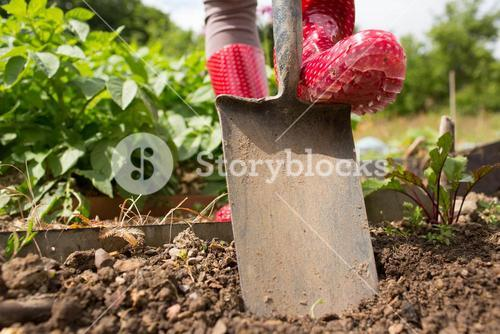 Woman wearing rubber boots working in the garden