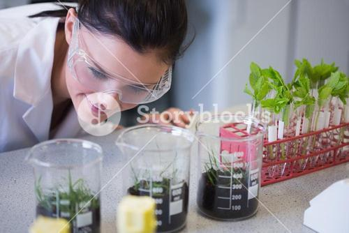 Female researcher looking at young plants at lab