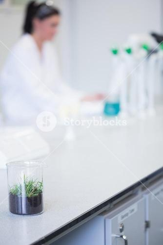 Young plant on table with blurred researcher in background