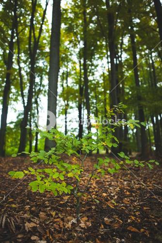 Young plant against tree trunks in forest