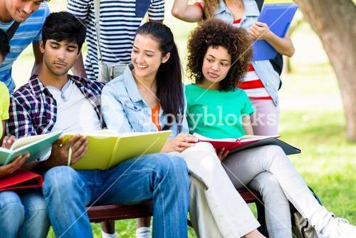 University students studying on bench