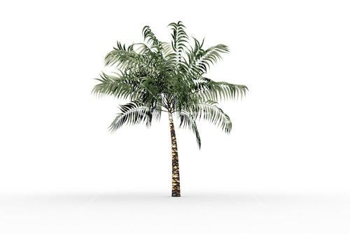 Tropical palm tree with green foilage