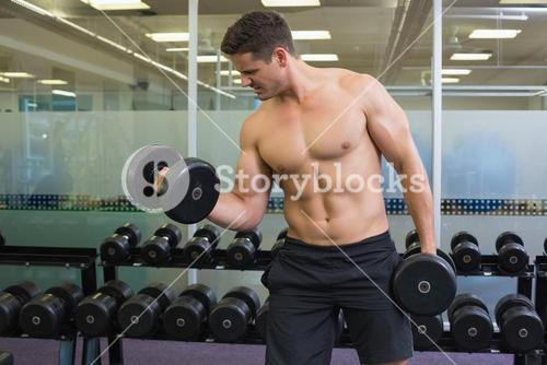 Shirtless determined bodybuilder lifting heavy black dumbbells