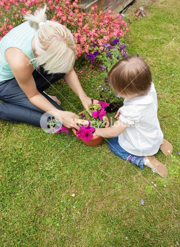 Family plant flowers in the garden