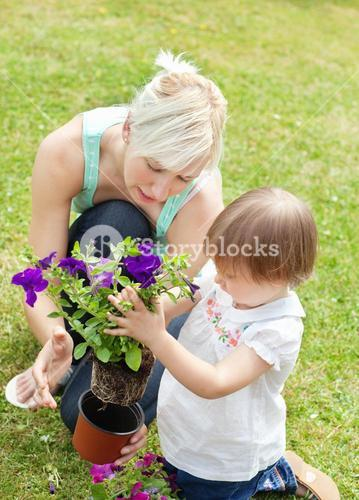 Family plant flowers