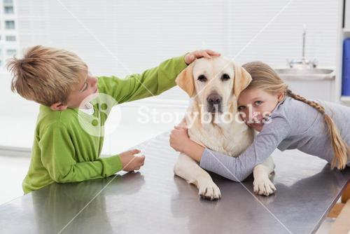 Cute labrador with its owners
