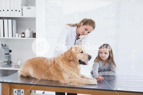 Happy vet checking a labrador