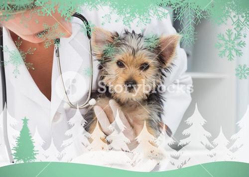 Composite image of vet holding cute puppy