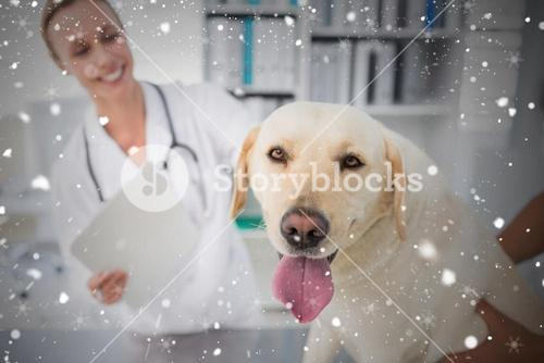 Composite image of dog with female veterinarian