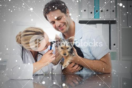 Composite image of veterinarian examining ear of puppy