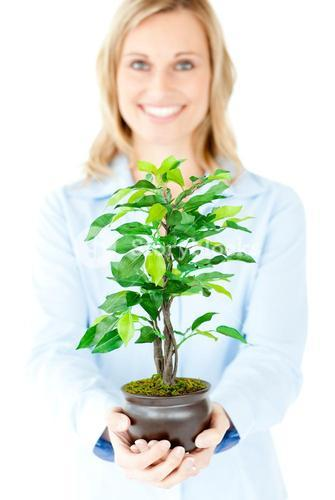 Portrait of a selfassured businesswoman holding a plant