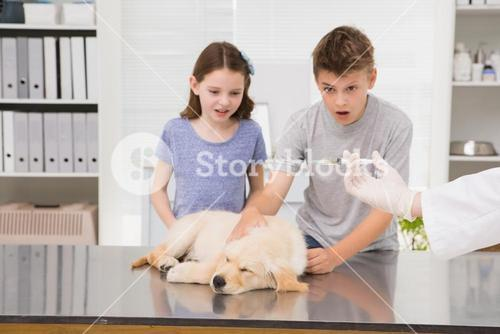 Vet examining a dog with its scared owner