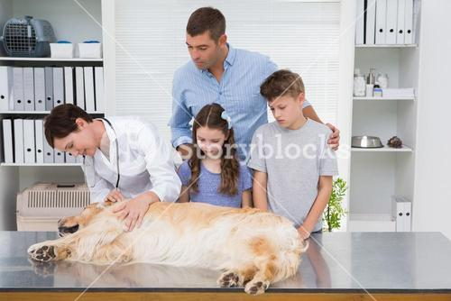 Smiling vet examining a dog with its scared owners