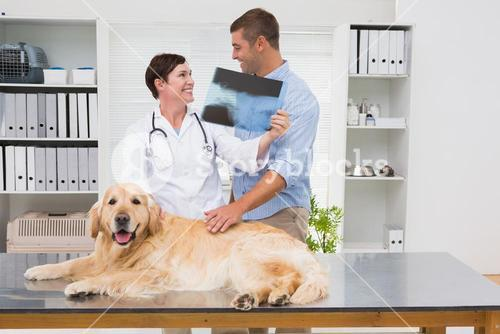 Veterinarian showing x-ray to dog owner