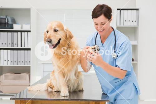 Vet using nail clipper on a dog